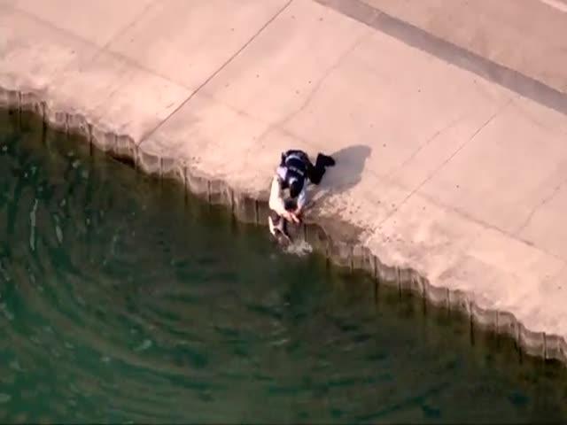 В Чикаго полицейский спас собаку