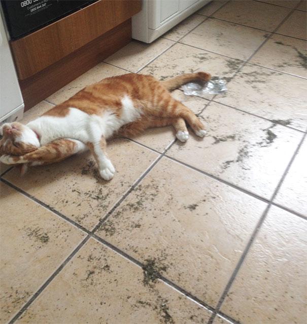 Забавные коты под различными веществами (32 фото)