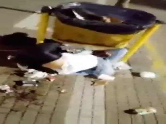 Не стоит лазить на мусорки