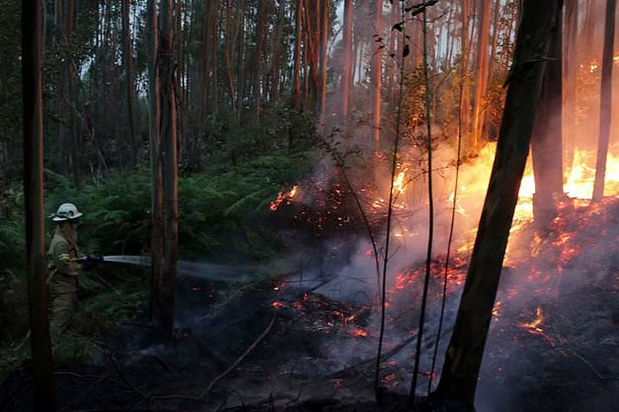 portugal_forest_fires_02.jpg