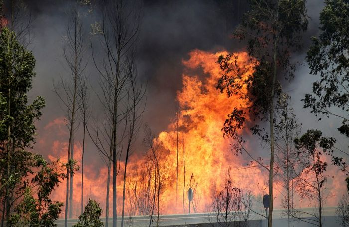 portugal_forest_fires_05.jpg