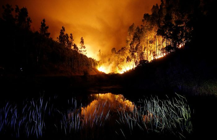 portugal_forest_fires_10.jpg