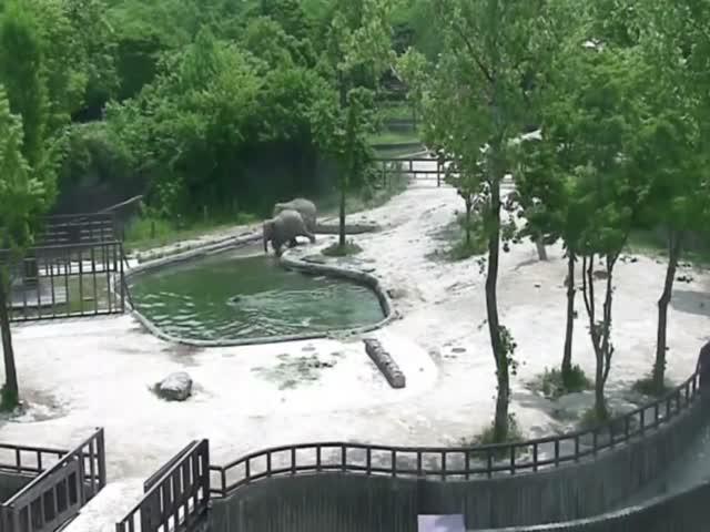 Слоны помогли слоненку, свалившемуся в воду