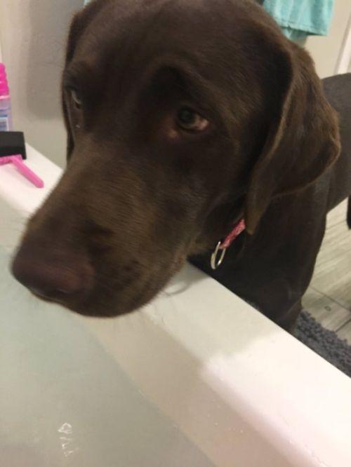 Собаке тоже захотелось принять ванну (4 фото)