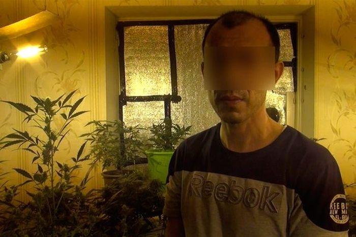 В Самаре задержали плантаторов конопли (8 фото)