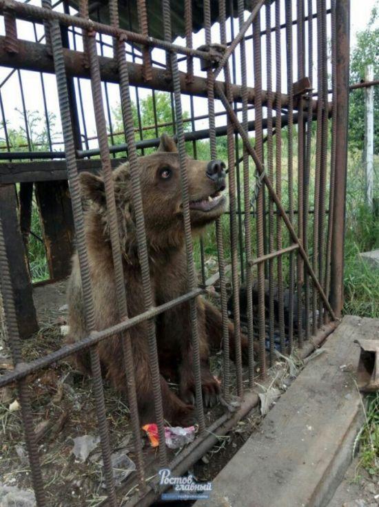 В Новошахтинске в заброшенном зоопарке голодают животные (6 фото)