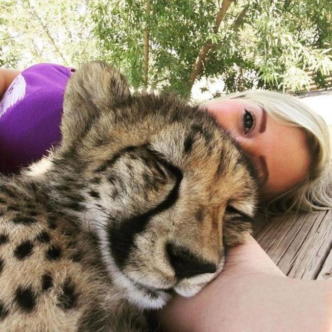 Она спасла котенка гепарда от охотников за трофеями (8 фото)