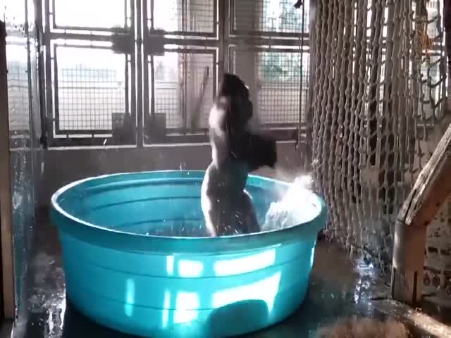 Танцующая горилла