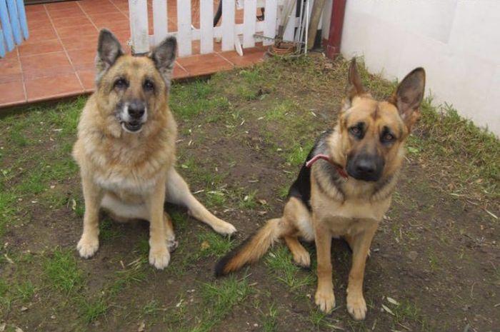 Сильные фото двух собак (3 фото)