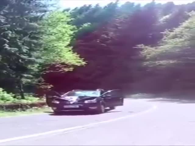 Что бывает, когда лошадь встречается с автомобилем