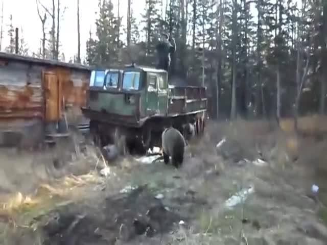 Вахтовики кормят медведя и играют с ним