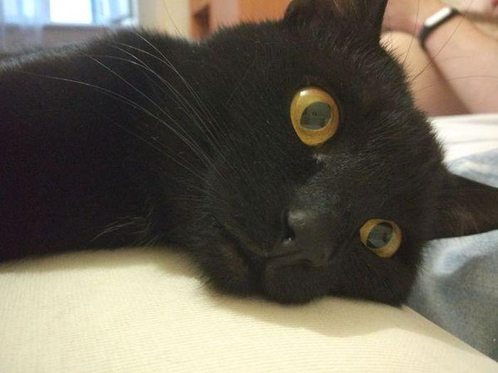Неспокойный кот (5 фото)