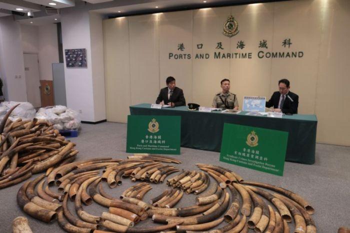 В Гонконге остановили партию слоновой кости стоимостью 9,2 млн долларов (6 фото)