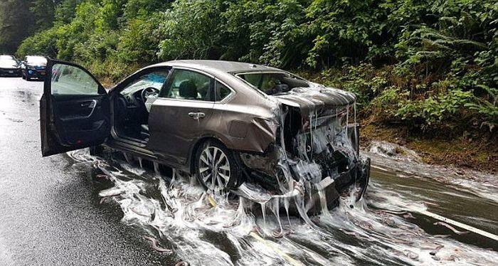 В США в результате ДТП трасса и машины оказались залитыми слизью (6 фото)
