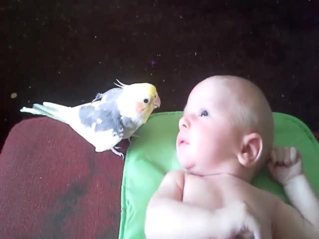 Попугай поет ребенку