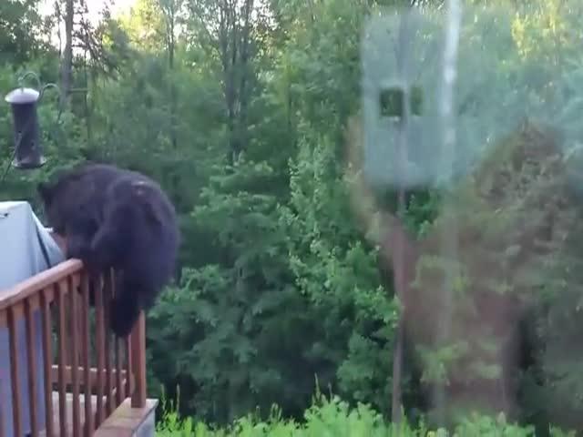 Медведь хочет в гости
