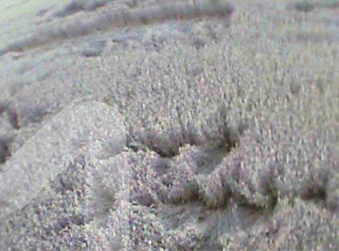 В Ростовской области обнаружили странное поле (4 фото)