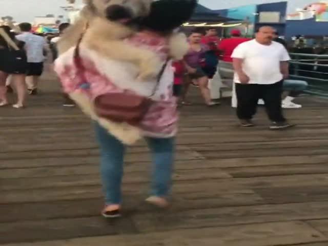 Собаке нравится, когда ее несут на руках