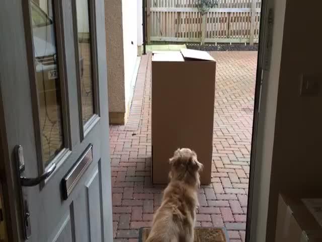 Сюрприз для собаки