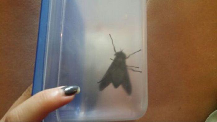 Вот такие немаленькие насекомые водятся в южных штатах США (3 фото)