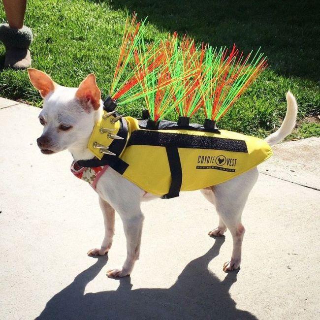 Защитный жилет для собак (6 фото)