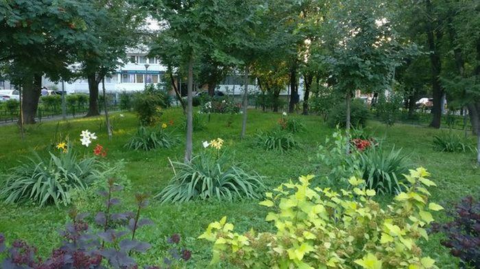 Красота в обычном московском дворе (4 фото)