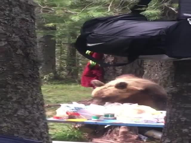 Медведь позавтракал за столом туристов