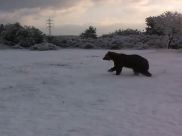 Первое знакомство циркового медведя со снегом