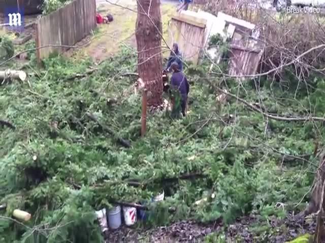 Как не стоит рубить деревья