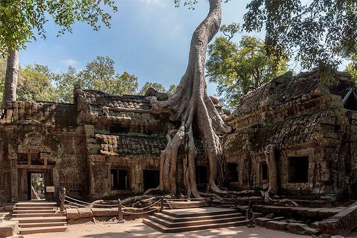 Деревья, растущие во необычных местах (31 фото)