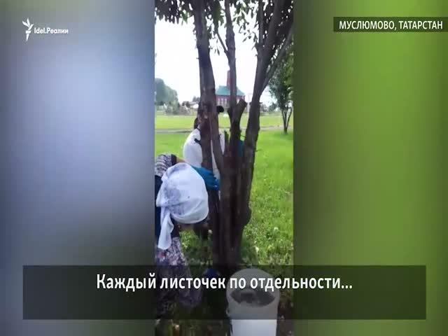 В Татарстане учителей заставили мыть деревья