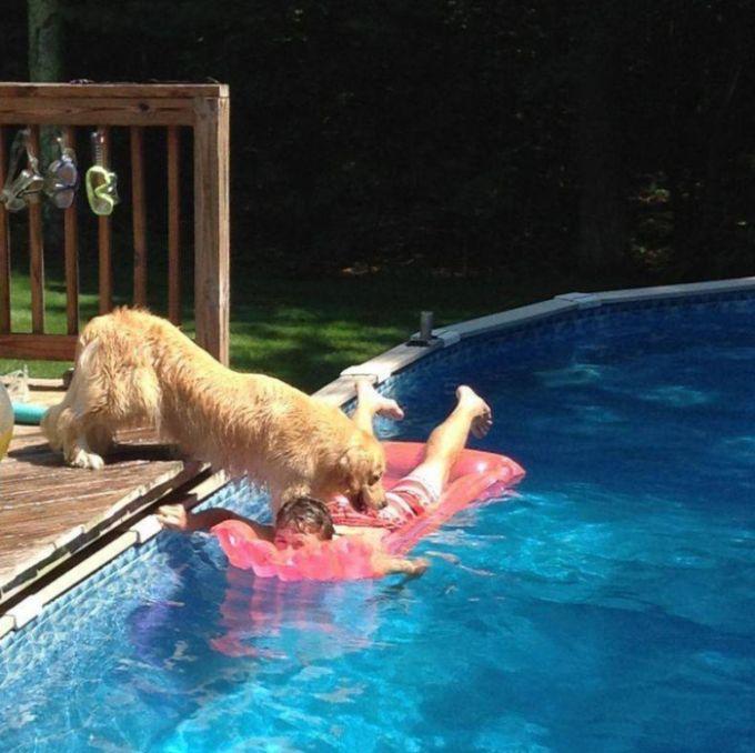 Собака, привыкшая добиваться того, чего она хочет (3 фото)