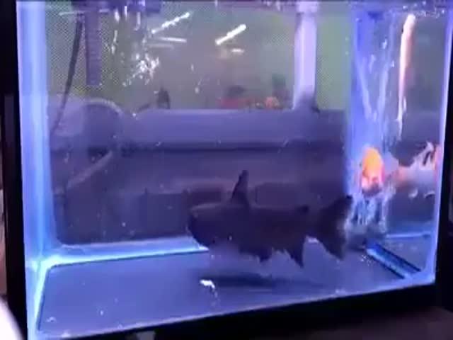 Неожиданный случай в аквариуме