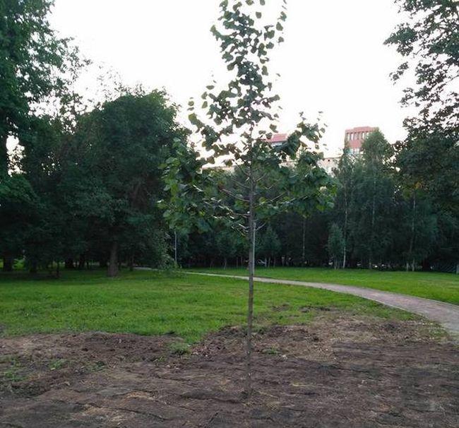 Московские коммунальщики уложили рулонный газон травой вниз (3 фото)