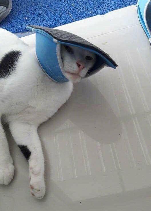 Кот решил поиграть с тапками, но проиграл (4 фото)