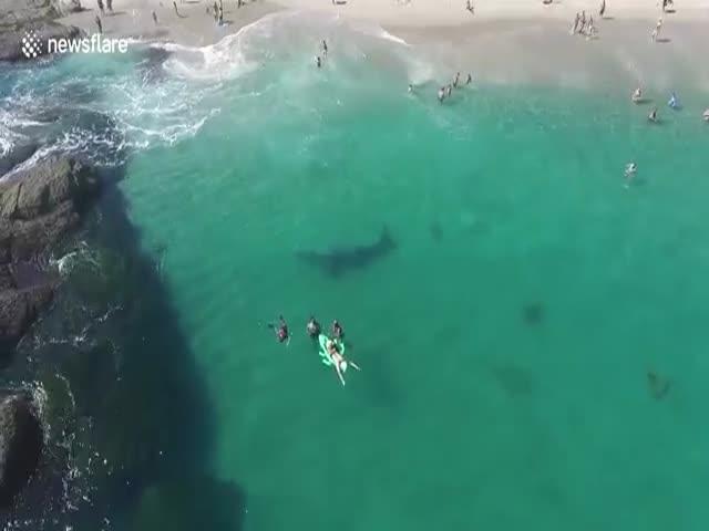 Серый кит заплыл на калифорнийский пляж