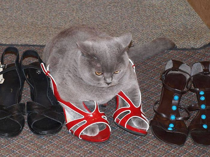 Главное, чтобы котам было удобно (33 фото)