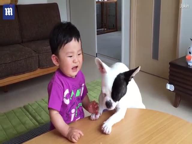 Собака утешила мальчика, съев его крекеры