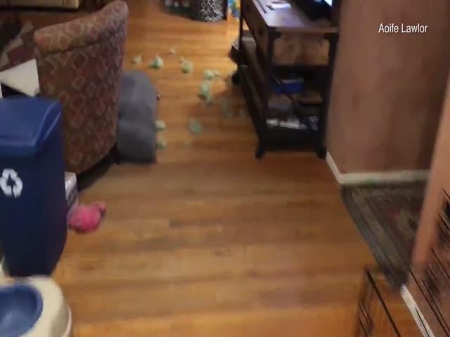 Собаки спрятались в клетки, понимая, что их будут ругать