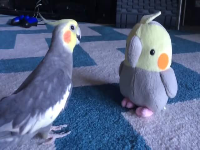 Забавная реакция попугая на плюшевую версию себя