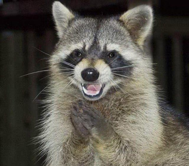 Животные тоже умеют улыбаться (39 фото)