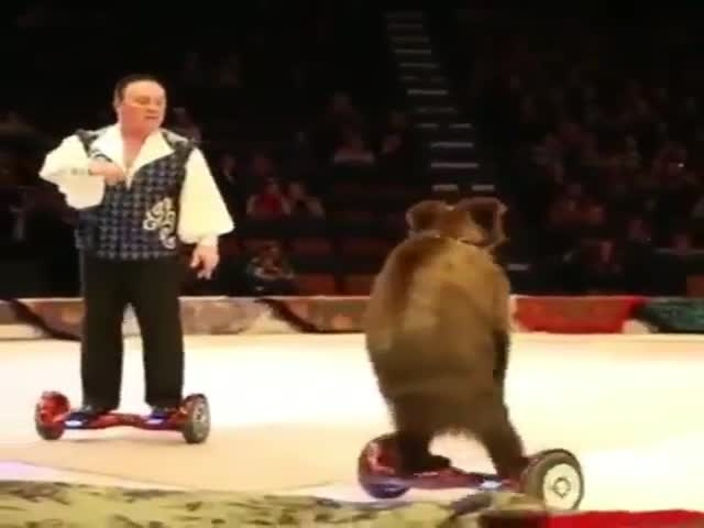 Медведь катается на ховерборде