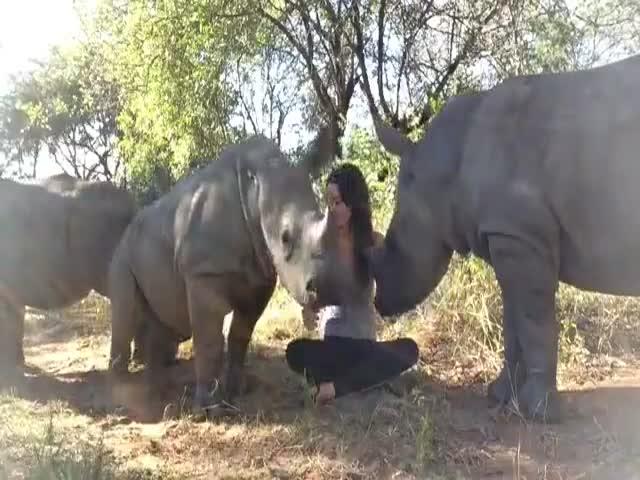 Детеныш носорога хочет ласки