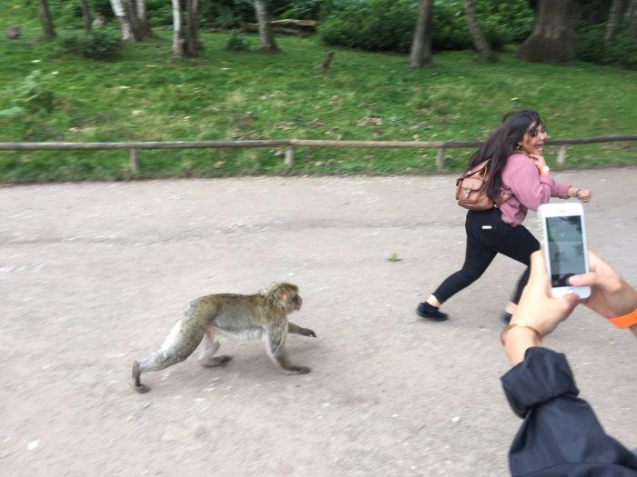 Фото на память с обезьяной (4 фото)