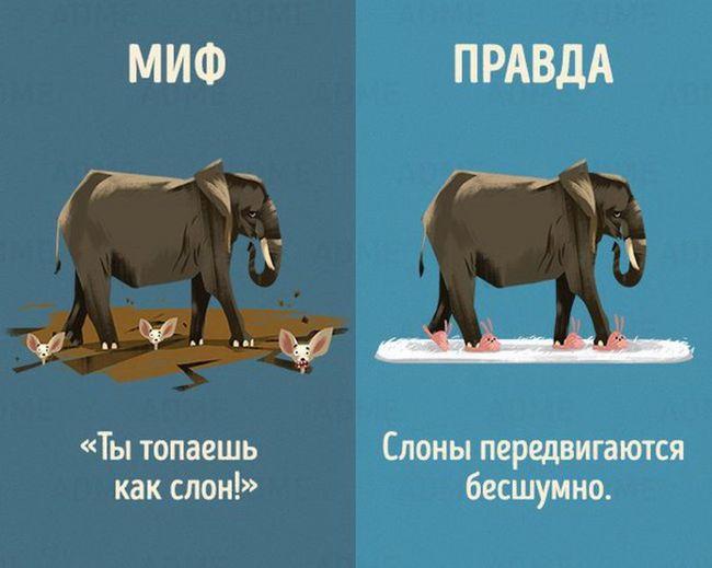 Мифы и правда о животных (10 картинок)