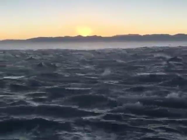 Стая дельфинов сопровождает лодку
