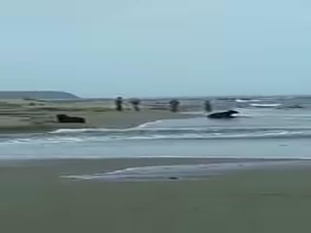 Медведи на побережье Сахалина