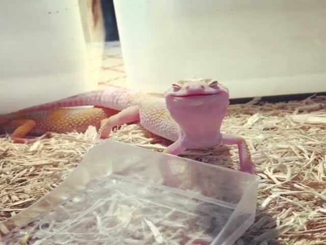 Довольная ящерица