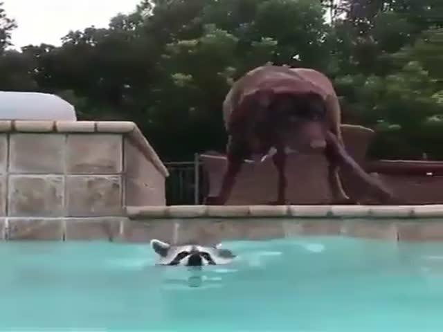 Животные тоже любят купаться в бассейне