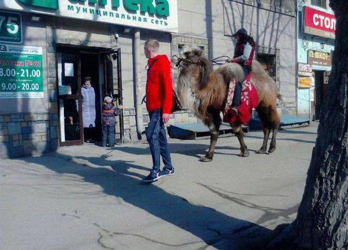 Такое вы сможете увидеть только в России (39 фото)